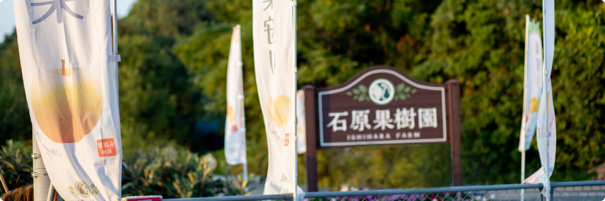 石原果樹園ののぼりと看板